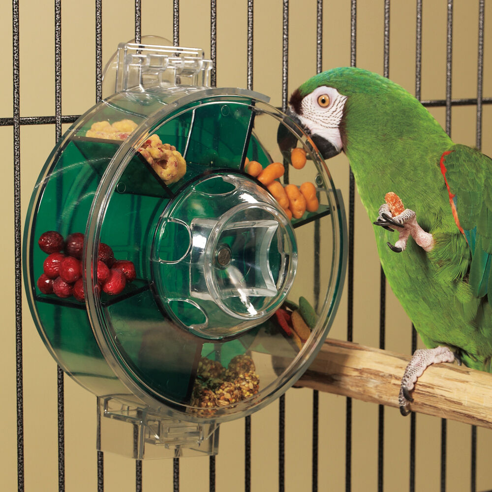 Toys For Birds : Wheel forager bird toy ebay