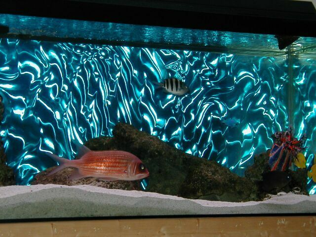 3d aqua lenticular fish tank backing looks amazing ebay for Fish tanks for sale ebay