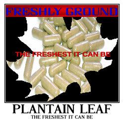 PLANTAIN LEAF The Freshest It Can Be Fresh Ground 100 Vegetarian Capsules