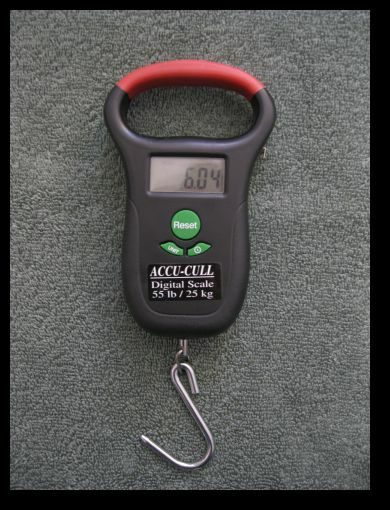 Acucull fish digital weigh scale tape 55 tournament for Tournament fish weighing scales