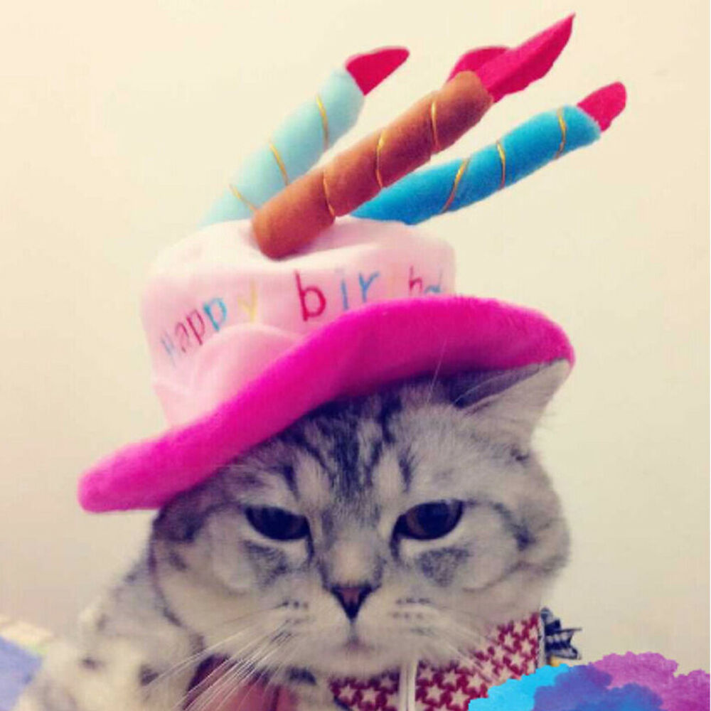 Details About Cute Dog Pet Birthday Hat Happy Cat Puppy For All Breeds Dogs