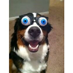 Dog With Funny Glasses Pop out Eyes Smile Silly Paw Love Best Friend Game Puppy