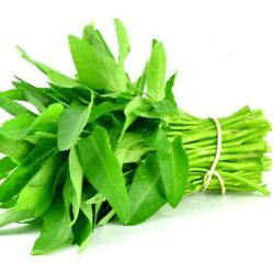 Kyпить 1000+ (selected seeds) Rau Muong, Ong Choy, Brown Water Spinach Seed USA Seller на еВаy.соm