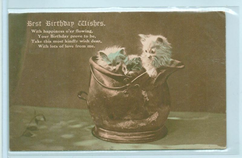 Details About VINTAGE BIRTHDAY WISHES CATS KITTENS IN BUCKET POSTCARD