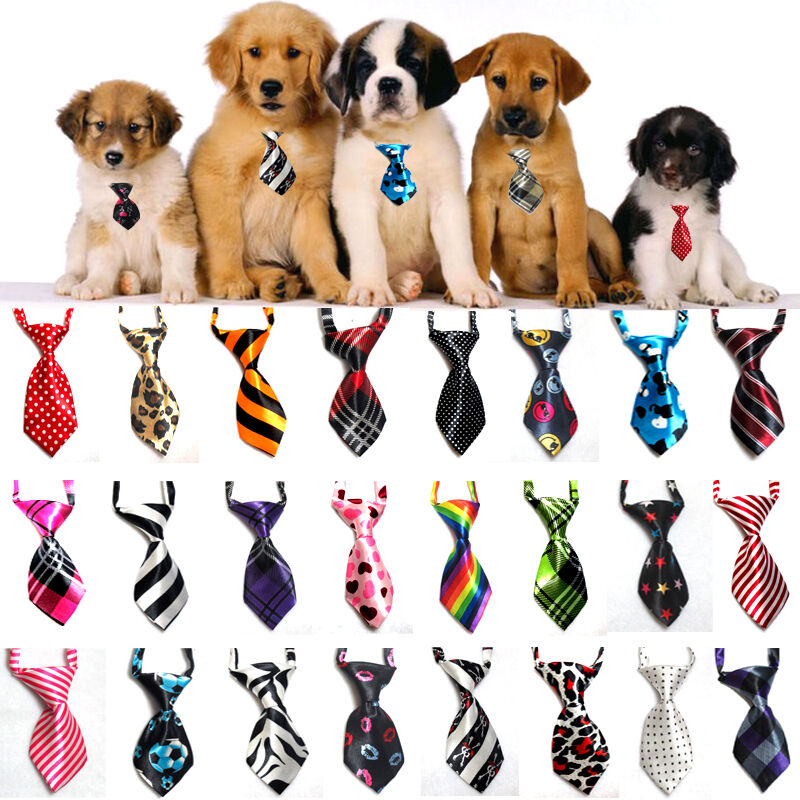 Dog Collar Tie Out