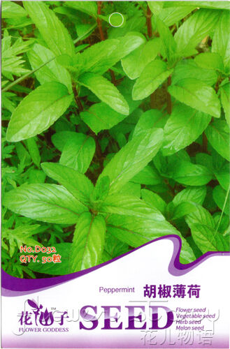 6 kinds mint seeds flower seed medicinal plants refreshing