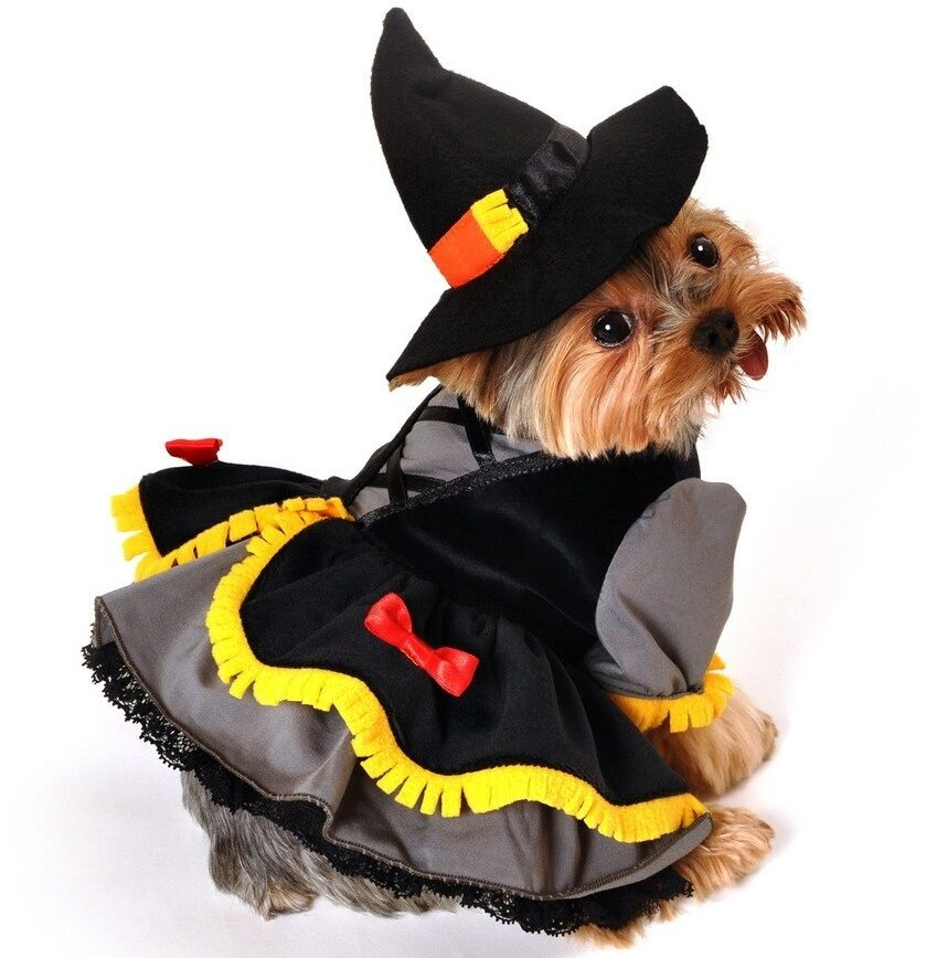 Pet dog cat puppy witch halloween gift fancy dress costume outfit