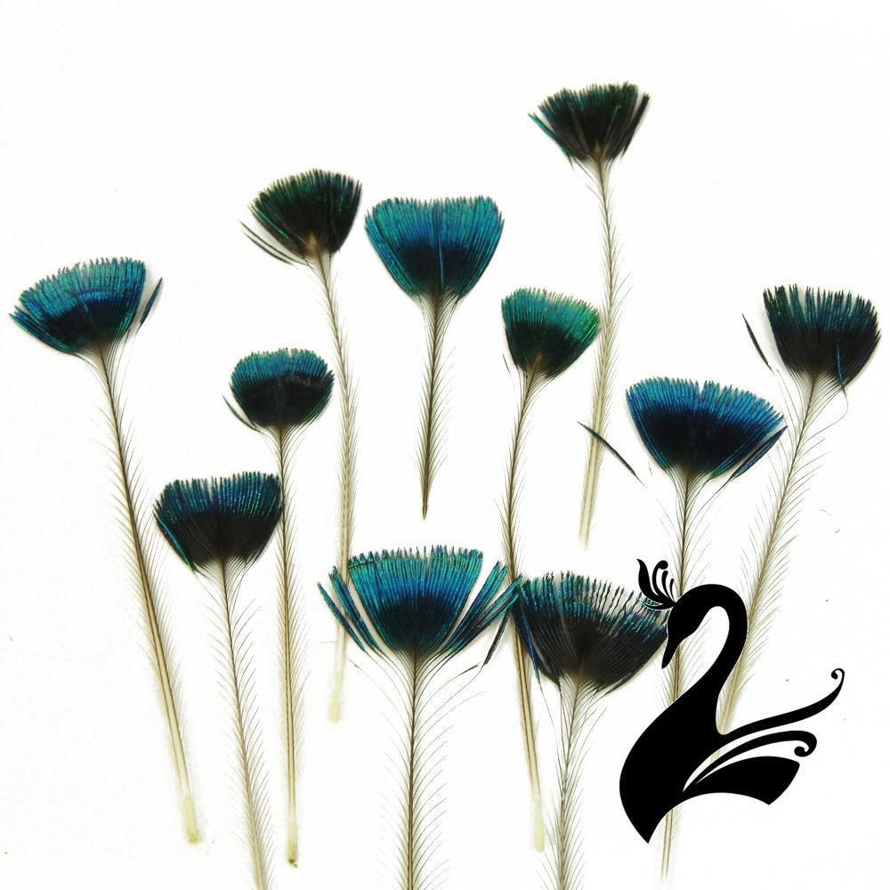 Feather peacock crest corona crown feathers pack of 20 for Where to buy craft feathers