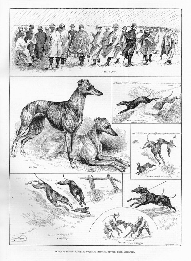 Louis Wain Greyhound Dogs Coursing Competition Dog Catches Rabbit