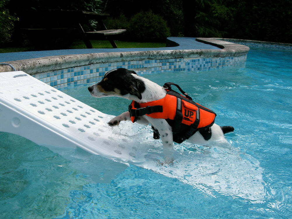 Swimming Pool Super Skamper Ramp Skr3 Small Pets Dogs