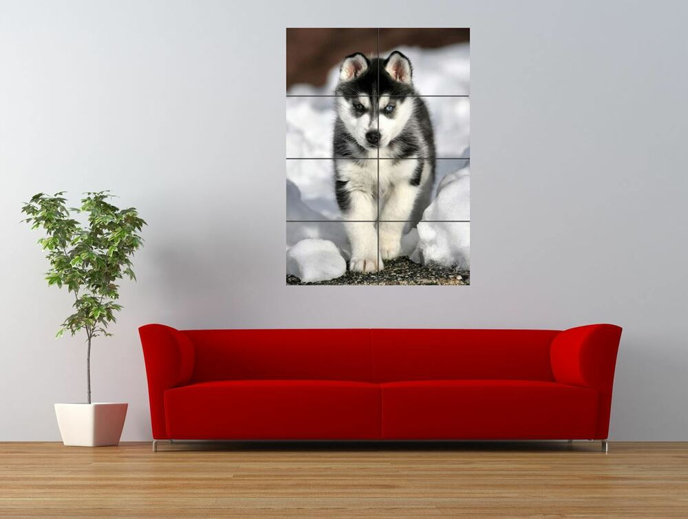 siberian husky puppy cute dog cool giant art print panel poster nor0006 ebay. Black Bedroom Furniture Sets. Home Design Ideas