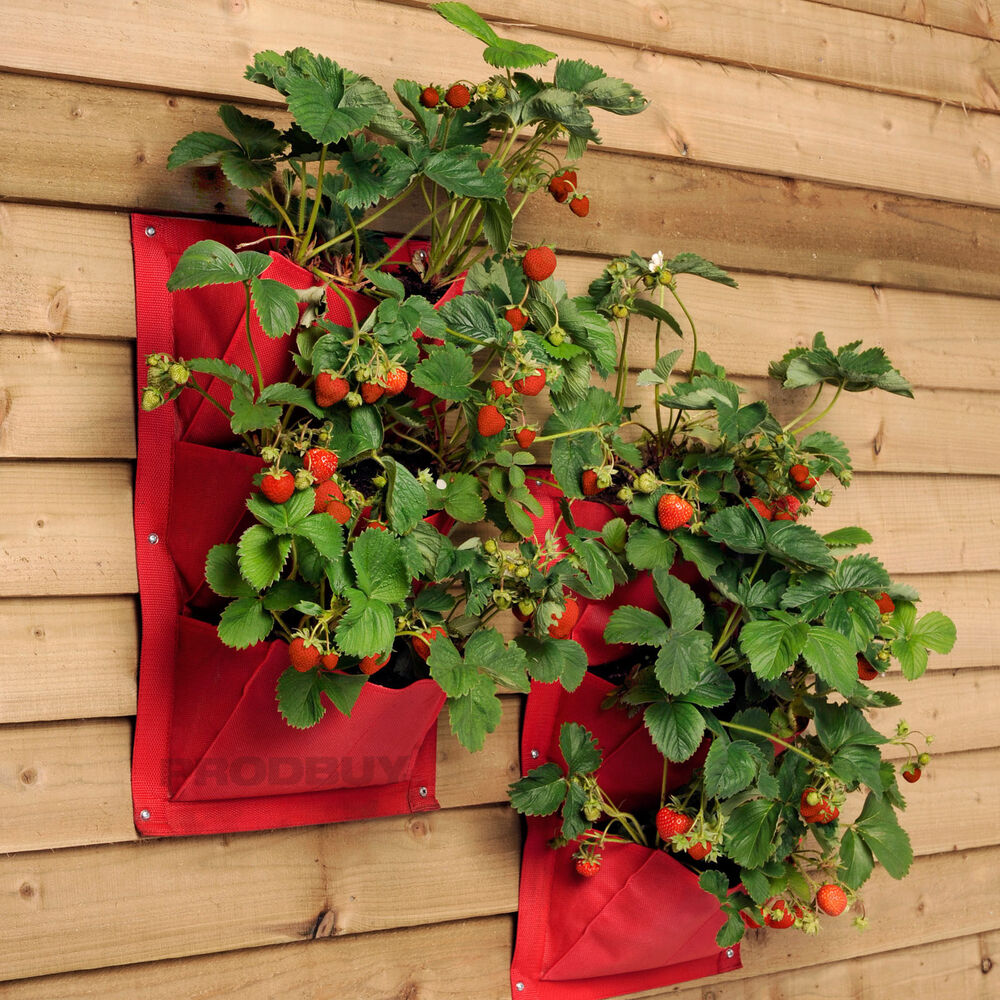 4 x 3 pocket burgon ball strawberry verti plant vertical garden wall planters ebay. Black Bedroom Furniture Sets. Home Design Ideas