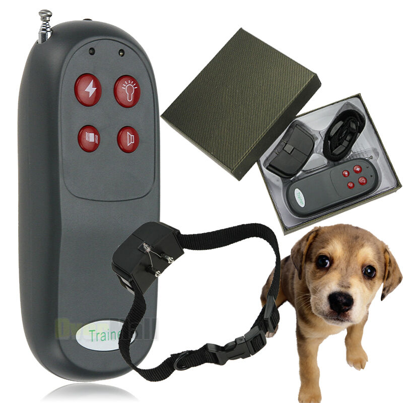 Dogs And Shock Collars