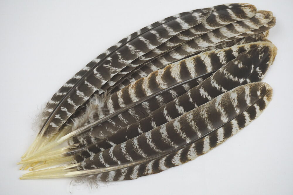 12 1 wild turkey adult sec wing feathers barred rounds for Where to buy craft feathers