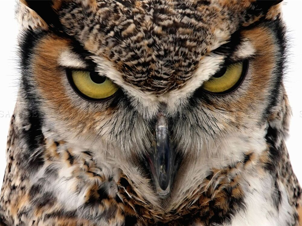 OWL BIRD FACE EYES CLO...