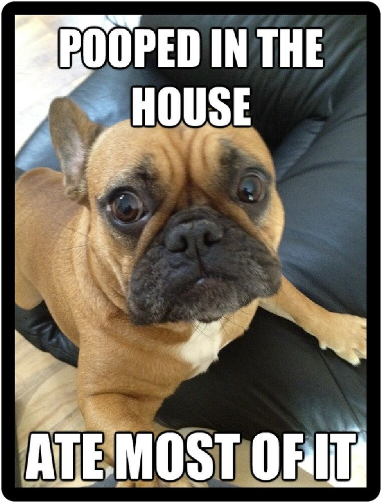 bulldog jokes funny dog humor french bulldog pooped in the house 1677