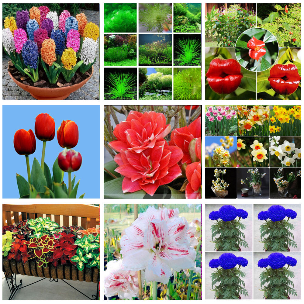50 Styles Rare Healthy Lot Plants Seeds Vagetable Fruit Flower Yard Decor Ebay