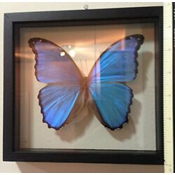 Kyпить  Blue Morpho Butterfly Framed and Mounted in Black Display  на еВаy.соm