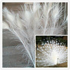 White Natural Peacock Feathers 28-32inch70-80cm 10-100 Pcs Carnival Diy Costume
