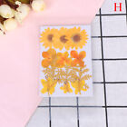 Pressed Flower Bag Mixed Organic Natural Dried Flowers Diy Art Floral Decors Sg