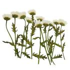 Beautiful Real Pressed Flower Dried Flowers For Arts Crafts Resin Jewelry Making