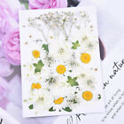Natural Dried Flowers Combination Diy Dry Flower Decorative For Crafts Jewelry