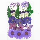 Dried Flowers Pressed Scrapbook Bookmark Card Making Diy Art Craft Decor Supply