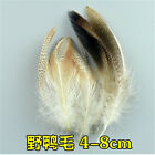 Wholesale 10-100pcs Beautiful Pheasant Tail Peacock Feathers 3-20cm2-8inches
