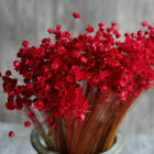 Natural Floral Branches Bouquet Colorful Dried Daisy Blossom Home Decoration Red