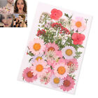 Pressed Flower Mixed Organic Natural Dried Flowers Diy Art Floral Decors Gift