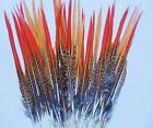 Red Tail Golden Pheasant Quills Feathers Pick Size From 2 To 12 Firm Feathers