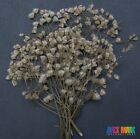 Pressed Bunch Of Flowers With Branches Real Natural Dried Rare Diy Floral Decors