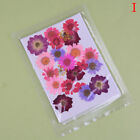 Pressed Flower Mixed Organic Natural Dried Flowers Diy Art Floral Decors Gift Lm