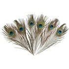 50 Pcs Peacock Tail Feathers 25-30cm For Wedding Craft Arts Home Decor