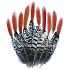 Natural Lady Amherst Pheasant Red Orange Tip Pheasant Feathers 10 Pieces Craft