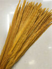 Beautiful 10-100pcs Special Color Pheasant Tail Feathers 10-18 Inches 25-45 Cm