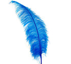 Ostrich Spads 20-30 Plume Feathers Many Colors Hatshalloweencenterpiece