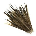 English Ringneck Pheasant Tail Natural Feathers 10-100 Pcs Many Sizes Halloween