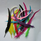 Rooster Tail Coque Feathers 6-10 Inches Many Colors Halloweencostumecraft
