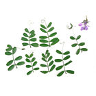 Dried Pressed Flowers Assorted Colorful Daisies Leaves Hydrangeas Fresh Craft