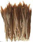 100 Golden Pheasant Feathers Beautiful Barred Pattern Sold By Length