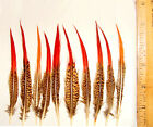 10 Golden Red Tip Pheasant Feathers 4 Sizes Available Pheasant Feathers
