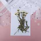 10pcspack Pressed Flower Dried Flowers For Diy Phone Case Bookmark Scrapbookido