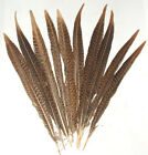 10 Golden Pheasant Feathers Beautiful Barred Pattern Sold By Length Pheasant