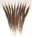 Beautiful Golden Pheasant Feathers Barred Pattern Pack Of 10 Sold By Length