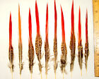 100 Golden Red Tip Pheasant Feathers 3 Lengths Available Pheasant Feathers