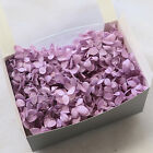 Real Preserved Dried Flower Fresh Hydrangea Flower Home Table Decoration Crafts