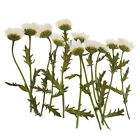 Variety Of Real Pressed Dried Flowers For Diy Scrapbooking Art Crafts Decoration