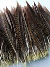 10-100pcs Beautiful Pheasant Tail Peacock Feathers 4-20cm2-8inches