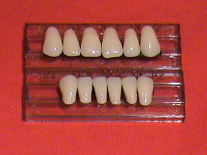 Denture Teeth Sizes http://www.ebay.com/itm/1-SET-ACRYLIC-ANTERIOR-DENTURE-FALSE-TEETH-SHADE-A3-SIZE-22-/271090663141